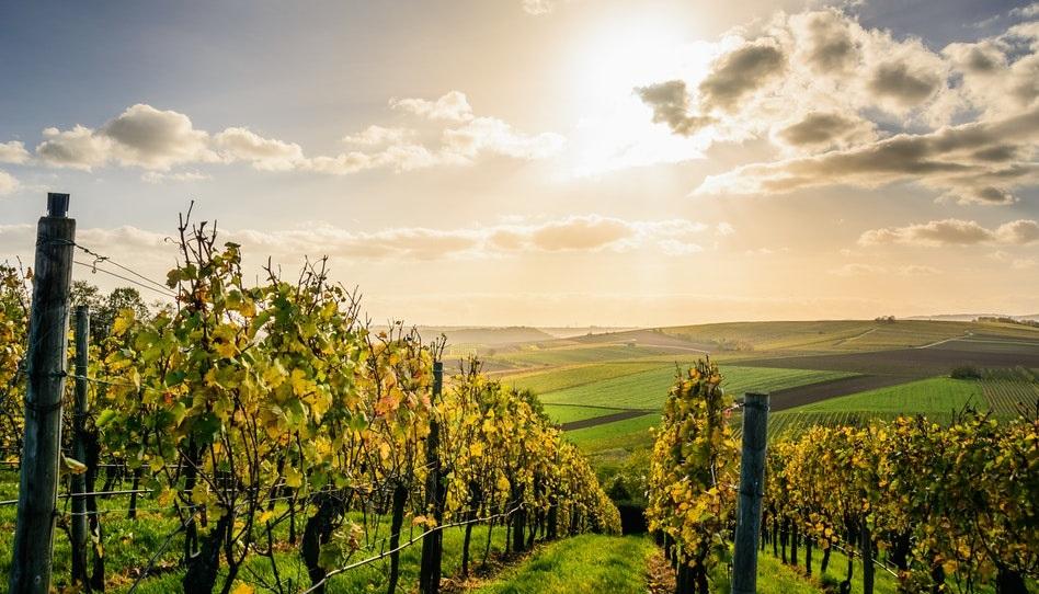 Weingarten Gleichnis