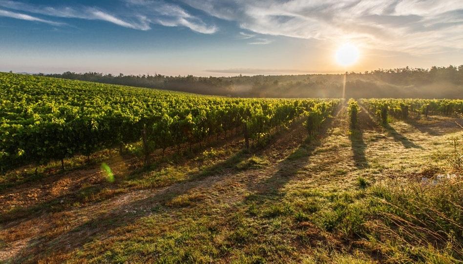 Gleichnis vom Weingarten