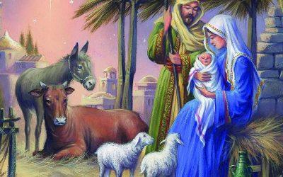 3 tierische Erkenntnisse zum Weihnachtsfest